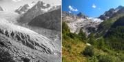 Glaciären Trient i Schweiz. Denis Balibouse and Glaziologische Kommission der Akademie der Naturwissenschaften Schweiz/ETH Library Zurich/REUTERS