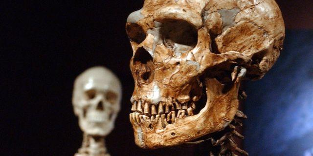 Ett kranium från en neandertalare. Frank Franklin II / TT / NTB Scanpix
