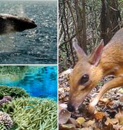 Knölval, korallrev och mushjort. TT