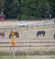 Hästar betar på en äng, arkivbild. Fredrik Sandberg/TT / TT NYHETSBYRÅN