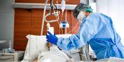 Sjukvårdare tar hand om en patient i Italien. Claudio Furlan / TT NYHETSBYRÅN