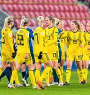 Svenska landslaget. RADOVAN STOKLASA / BILDBYRÅN