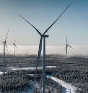 Vindkraftverk i Piteå. Magnus Hjalmarson Neideman/SvD/TT / TT NYHETSBYRÅN