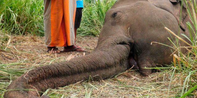 En död elefant i Sri Lanka. STR / AFP