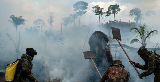 Brasilianska soldater släcker eld i Amazonas.  Leo Correa / TT NYHETSBYRÅN