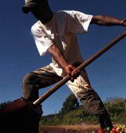 Arkivbild: Kaffebönor tvättas i närheten av staden Pocos de Caldas, Brasilien.  Dario Lopez Mills / TT NYHETSBYRÅN