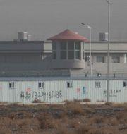 Ett av de så kallade omskolningslägrena i Xinjiangprovinsen. Ng Han Guan / TT NYHETSBYRÅN
