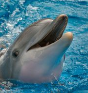 Delfin. Chris O'Meara / SCANPIX