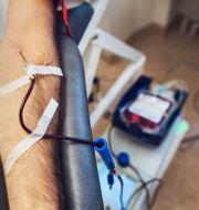 En person som lämnar blod.  Stina Stjernkvist/TT / TT NYHETSBYRÅN