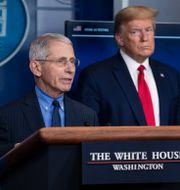 Anthony Fauci och Donald Trump vid en pressträff i april 2020. Alex Brandon / TT NYHETSBYRÅN