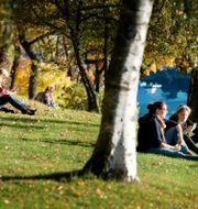 Skeppsholmen i Stockholm, arkivbild. JESSICA GOW / TT / TT NYHETSBYRÅN