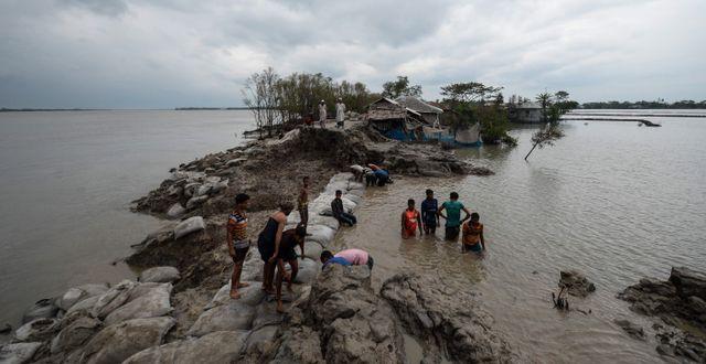 Lokalbor arbetar med att laga en trasig damm i staden Burigoalini i Bangladesh under stormens framfart. MUNIR UZ ZAMAN / TT NYHETSBYRÅN