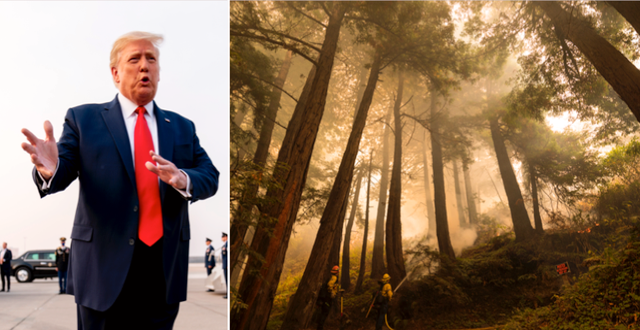 Donald Trump och brandsläckningsarbetet i Kalifornien igår. TT