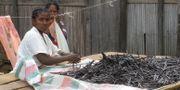 Kvinnor på Madagaskar sorterar vanilj Lemurbaby, Wikimedia Commons