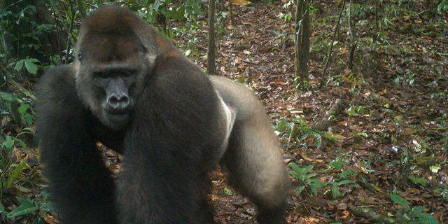 Bild från kameran i Nigeria.  TT NYHETSBYRÅN