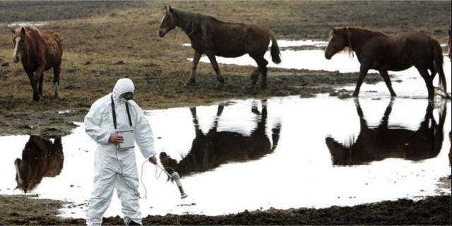 30 år efter katastrofen är det djuren som regerar i Tjernobyl. National Geographic