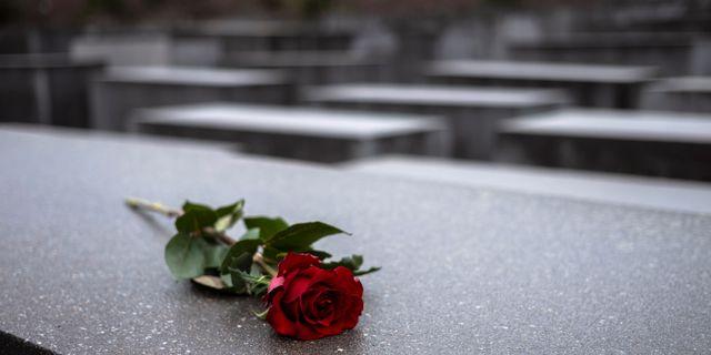 En röd ros vid minnesmärket för Förintelsen i Berlin.  Markus Schreiber / TT NYHETSBYRÅN/ NTB Scanpix