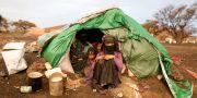 Bild från flyktingläger i Jemen. KHALED ABDULLAH / TT NYHETSBYRÅN