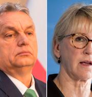 Carl Bildt (M) / Ungerns Viktor Orbán /Margot Wallström (S). CLAUDIO BRESCIANI/ Janerik Henriksson/ MICHAL CIZEK / TT NYHETSBYRÅN