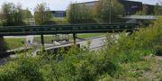 Utkanten av Stadsparken i Lund. Arkivbild. TT