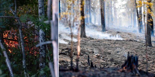 Två av sommarens skogsbränder. TT