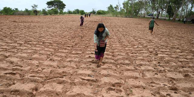 Arkivbild. Lantbrukare i regionen Magway. YE AUNG THU / AFP