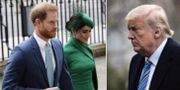 Harry, Meghan, Trump.  TT