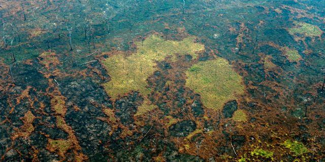 Bränd mark nära Boco do Acre i Amazonas. LULA SAMPAIO / AFP