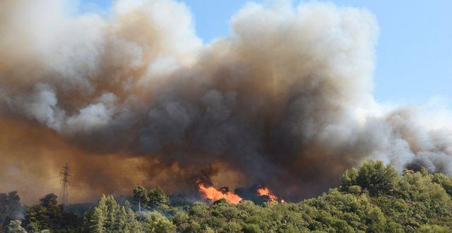 Skogsbrand nära byn Ziria på Grekland.  Andreas Alexopoulos / TT NYHETSBYRÅN