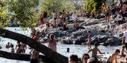 Människor som badar från klipporna vid Tantolundens badplats i Stockholm i det varma sommarvädret. Christine Olsson/TT / TT NYHETSBYRÅN