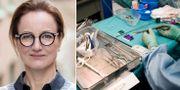 Cancerfondens generalsekreterare Ulrika Årehed Kågström / Arivbild.  Andrea Björsell, Cancerfonden / TT