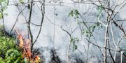 Polisen misstänker att bränderna i Småland är anlagda. Illustrationsbild.  Tomas Oneborg/SvD/TT / TT NYHETSBYRÅN
