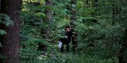 Skog nära staden Nucet i Rumänien/illustrationsbild.  Vadim Ghirda / TT NYHETSBYRÅN