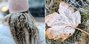 En tjej som har snö på sin mössa samt ett frostigt löv. Arkivbilder. TT