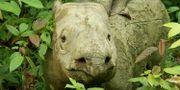 Noshörningen Iman Youtube