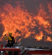 Brandmän kämpar mot elden  GENE BLEVINS / TT NYHETSBYRÅN