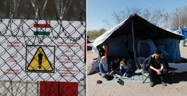 Ungerns gränsstängsel mot Serbien, flyktingar vid ländernas gräns. TT
