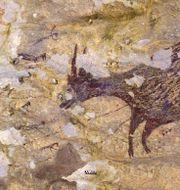 En av grottmålningarna i Sulawesi i Indoensien som uppskattas vara närmare 44000 år gammal.  INDONESIAN RESEARCH CENTRE FOR A / TT NYHETSBYRÅN