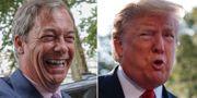 Nigel Farage och Donald Trump. TT.