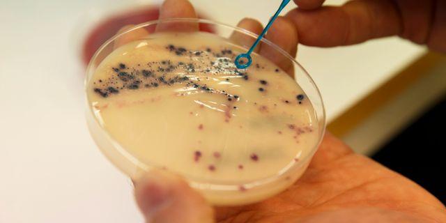 Antibiotikaresitenta bakterier. Poppe, Cornelius / TT NYHETSBYRÅN