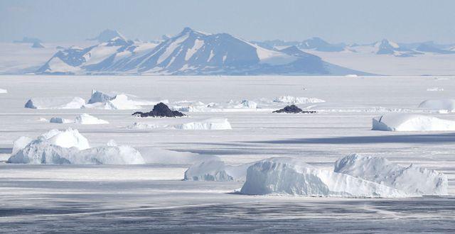 Antarktis. Illustrationsbild. / ASSOCIATED PRESS / TT / TT NYHETSBYRÅN