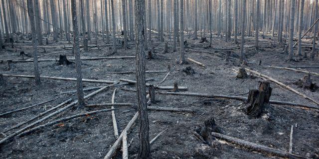 Skog for miljonbelopp forstord i branderna