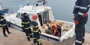 Får som undsatts efter fartygshaveriet utanför Rumäniens kust. - / IGSU Romania