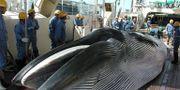 Institute of Cetacean Research / INSTITUTE OF CETACEAN RESEARCH