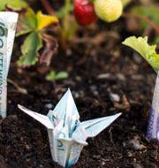 Få pengarna att växa. Pontus Lundahl/TT / TT NYHETSBYRÅN