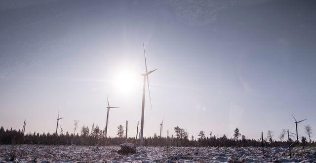 Markbygden 1101 utanför Piteå är Europas största vindkraftspark på land. Magnus Hjalmarson Neideman/SvD/TT / TT NYHETSBYRÅN