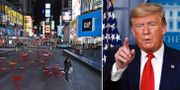 Gata i New York/Donald Trump. TT.