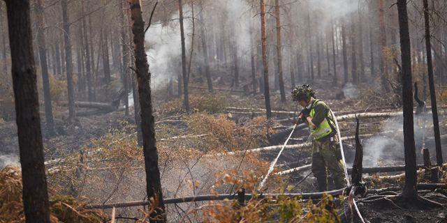 Släckningsarbete i skogarna utanför Oskarshamn. Andreas Hillergren / TT NYHETSBYRÅN