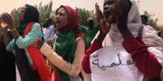 Sudanesiska kvinnor under protester i landet i juni. Hussein Malla / TT NYHETSBYRÅN