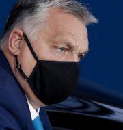 Ungerns premiärminister Viktor Orbán. Olivier Hoslet / TT NYHETSBYRÅN